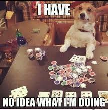 Casino Dog